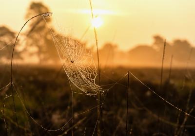 04 Spinnenweb