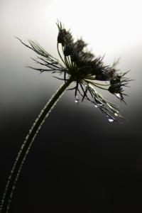 03 Raindrop