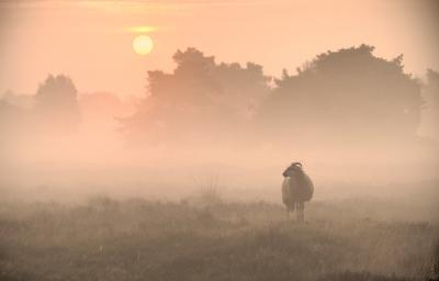 01 Ochtend mist
