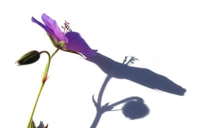 08 Purple shadow