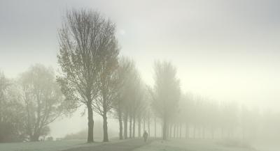 Mist_05573